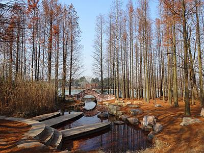 安徽合肥休闲游玩景点植物园图片