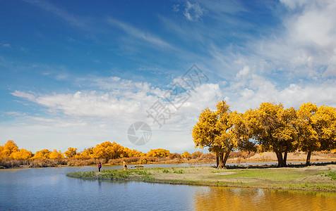 河流与胡杨图片