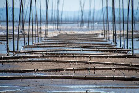 霞浦海边的养殖网图片