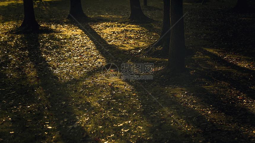 树木倒影图片