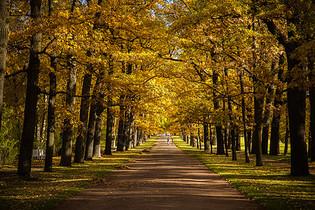 俄罗斯最美的园林秋色图片