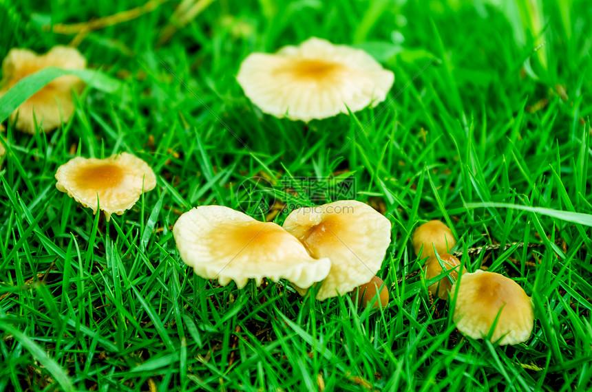雨后的蘑菇图片