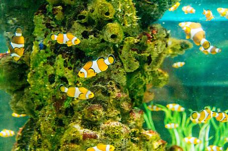 芽庄珍珠岛的海底世界图片