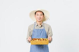 果农冬枣丰收图片