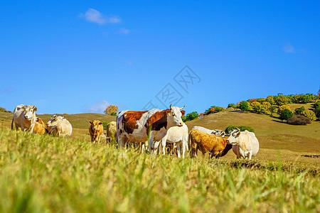 内蒙古自治区乌兰布统天太永景点图片