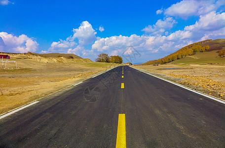 内蒙古自治区乌兰布统杨树背道路图片