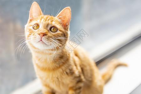 喵星人橘猫图片
