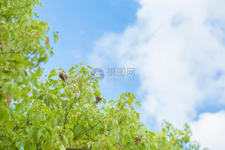 叶子和天空图片