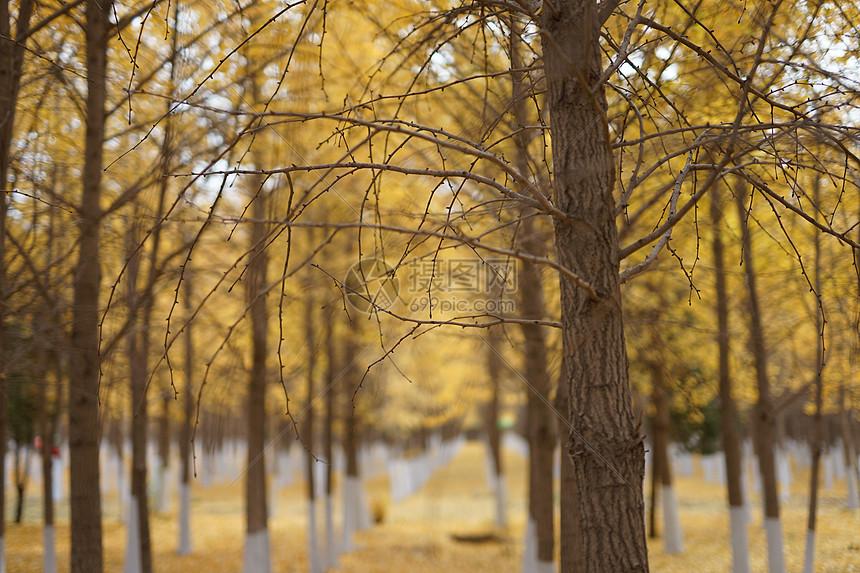 秋天的枯枝图片