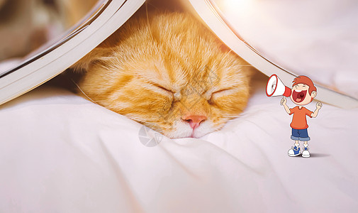 睡懒觉的猫图片