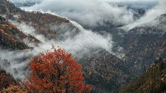 川西雾图片
