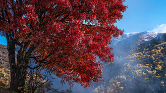 川西高原奶子沟之秋图片