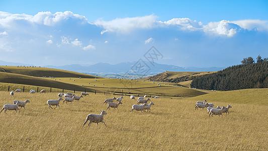 新西兰牧场图片