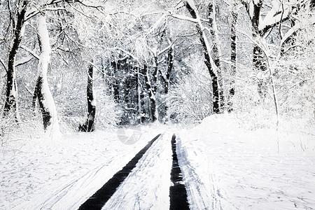 雾凇雪景图片