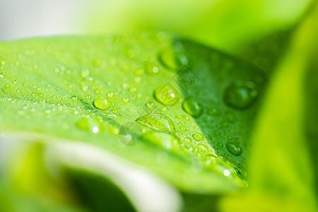 清新水珠绿叶图片