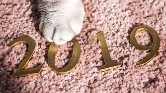 新年元旦2019与猫爪图片