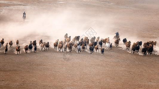 内蒙古坝上秋色马群图片