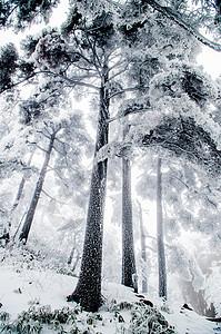 黄山雾凇雪景图片