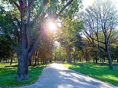 奥地利维也纳公园的林间道路图片