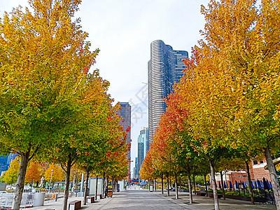 芝加哥秋景图片