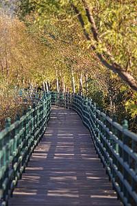 云南野鸭湖林间小道图片