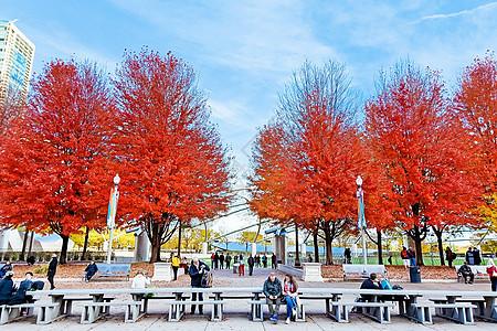 芝加哥千禧公园枫树图片