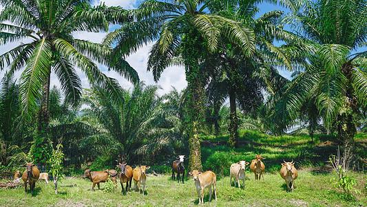 世界文化遗产玲珑谷地考古遗迹图片