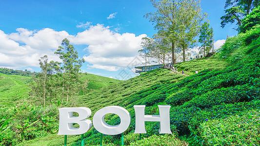 马来西亚茶园BOH图片