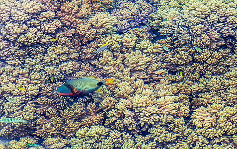 海中的珊瑚和彩色的鱼图片