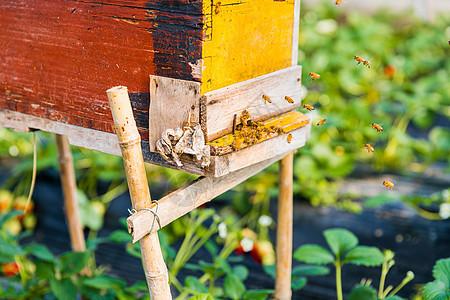 蜂箱与蜜蜂图片