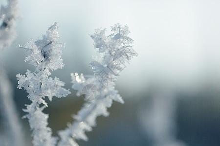 树枝雾凇雪花特写图片