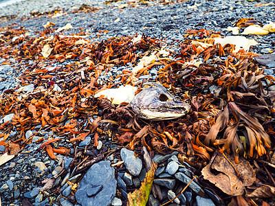 海边搁浅死鱼烂虾图片