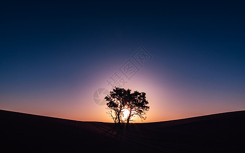 天边日出一棵树图片