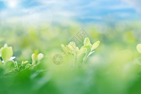 温暖春天图片