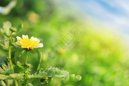 春天的野花图片