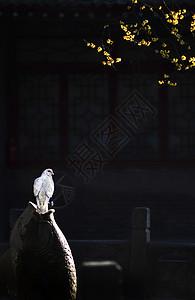 禅意寺庙图片