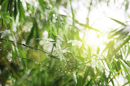 雨后阳光图片