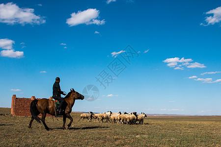 内蒙古草原的牧羊人图片
