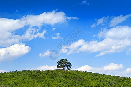 绿色草原图片