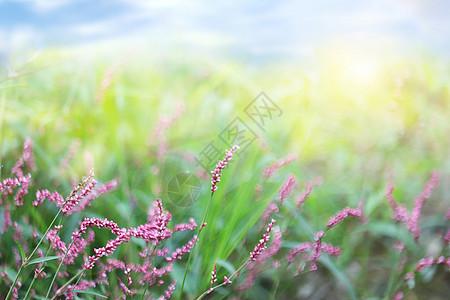 春天野花背景图片