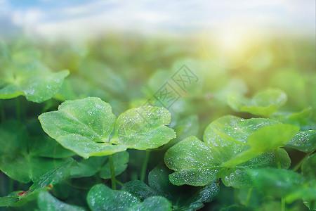 春之雨露图片