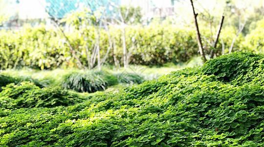 上海辰山植物园绿色植物图片