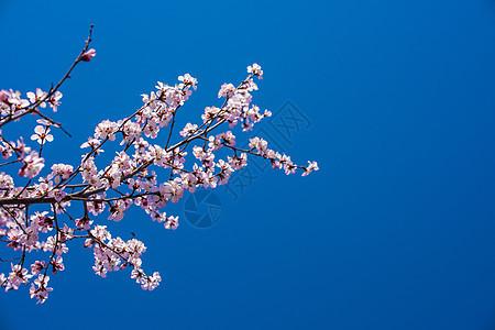 春季梅花图片