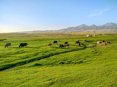 新疆喀纳斯草原牧场风光图片