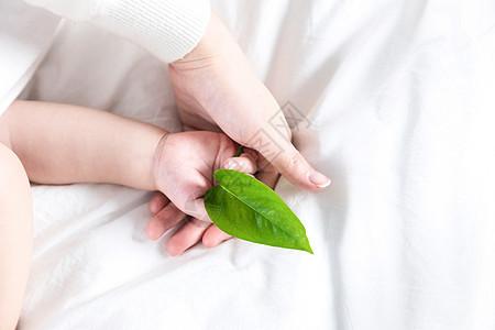 婴儿手持绿叶图片