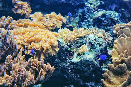 海底世界珊瑚礁图片
