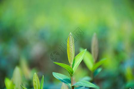 正在发芽的绿色植物图片