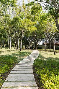 公园环境小路林荫道图片