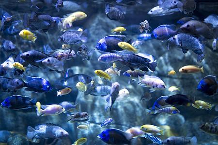 水缸里的观赏鱼图片