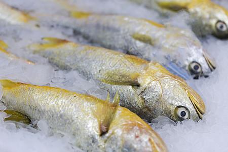 黄花鱼背景图片